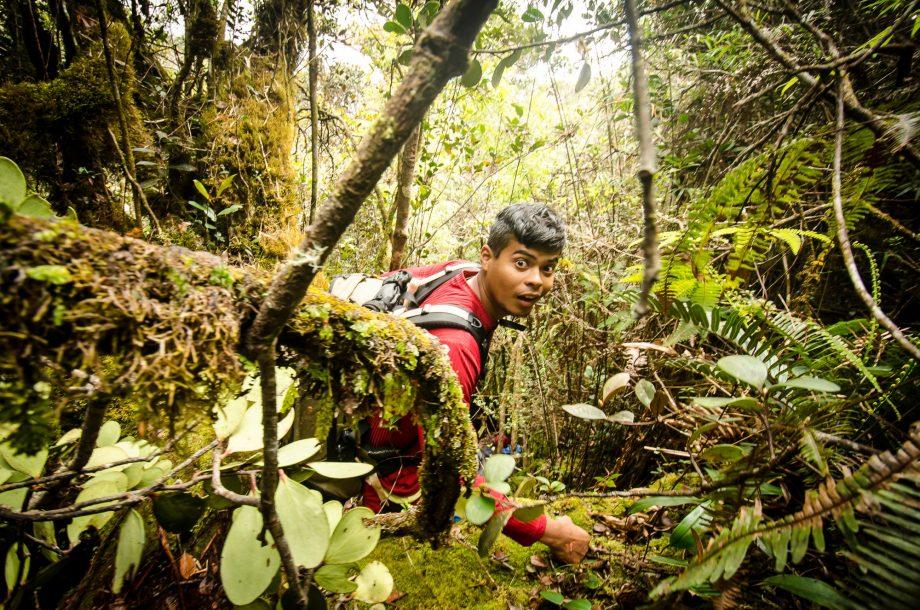 Tangled Underbrush