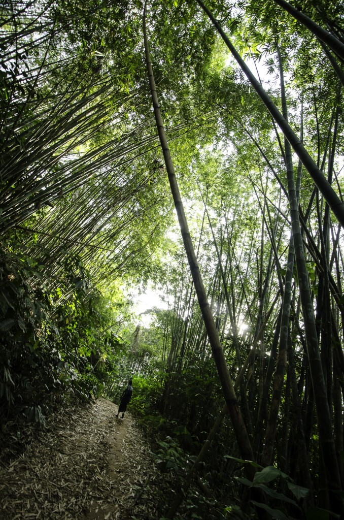 The Nuang Trail