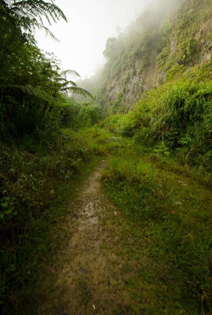 The Bunga Buah Trunk Road