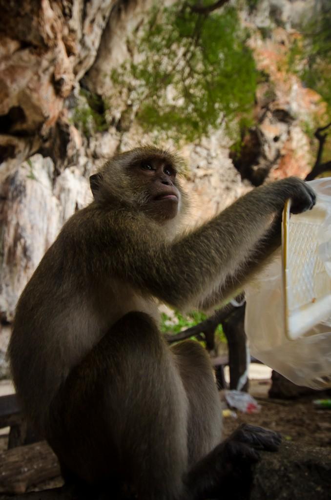 Monkeys at Phra Nang Beach