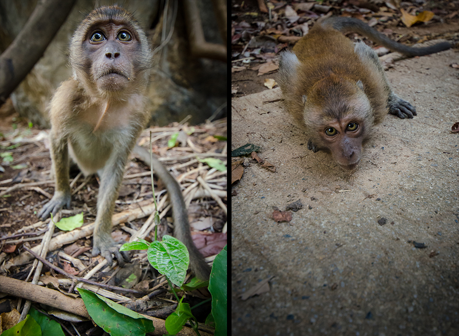 Railay Monkeys