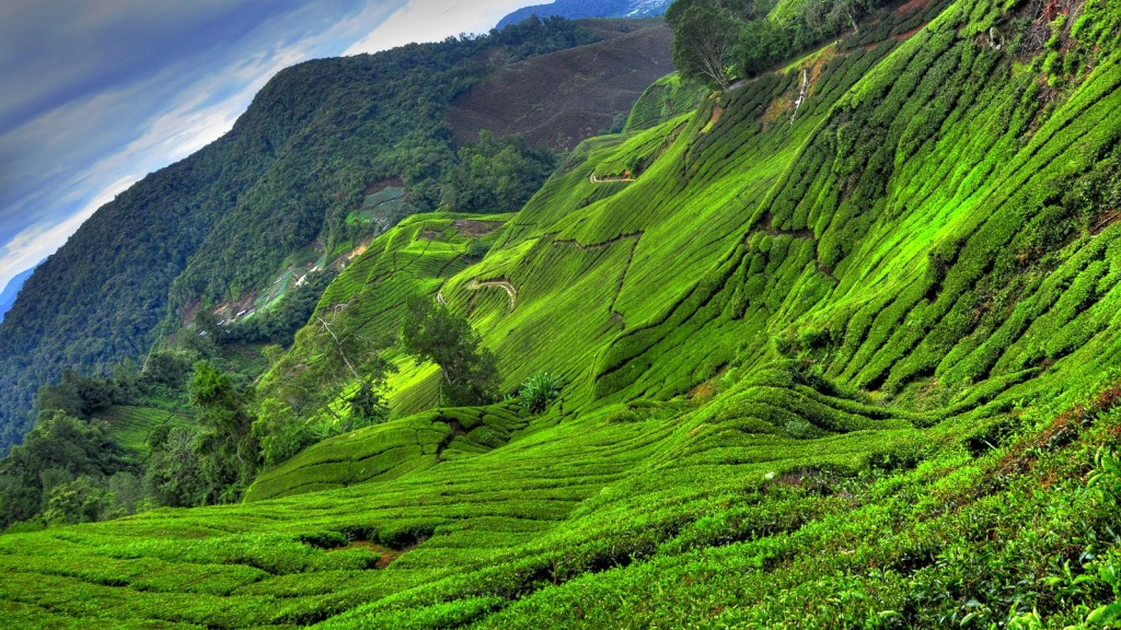 Cameron Tea Plantations