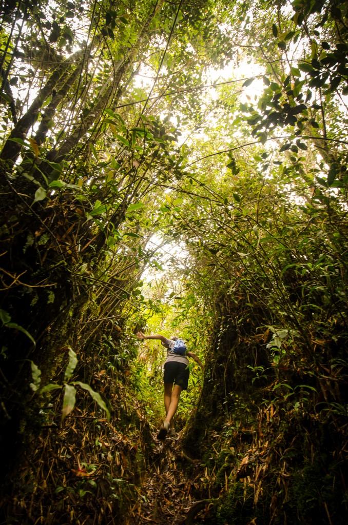Ulu Semangkok Trail