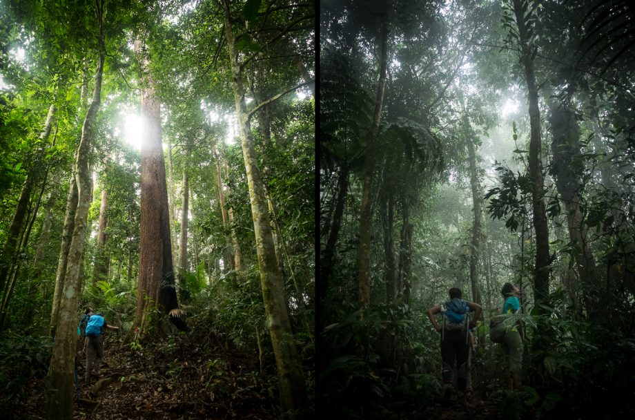 Nuang trees