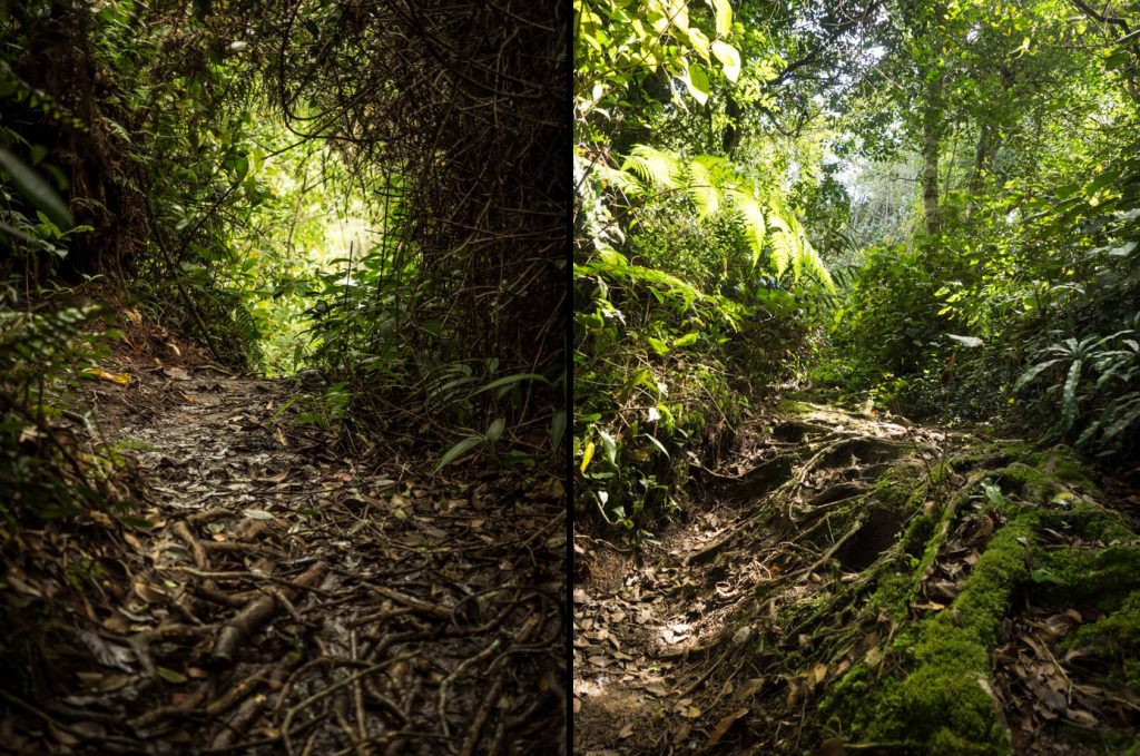 Berembun Trail Erosion