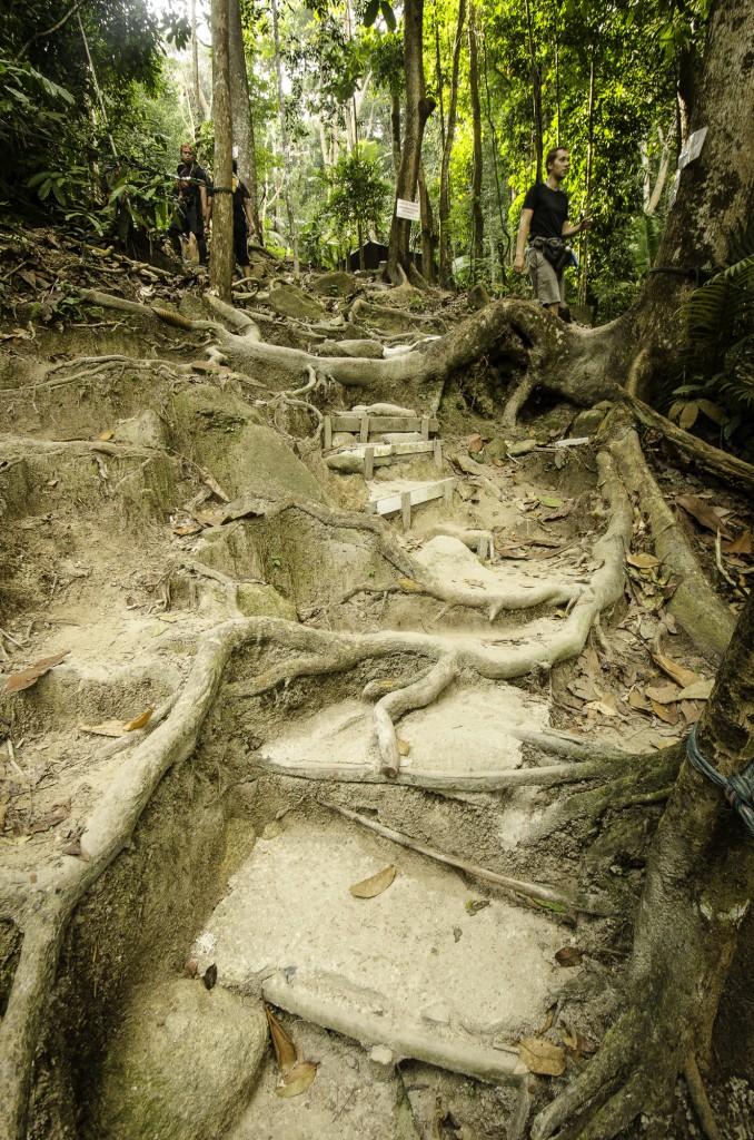 Saga Trail