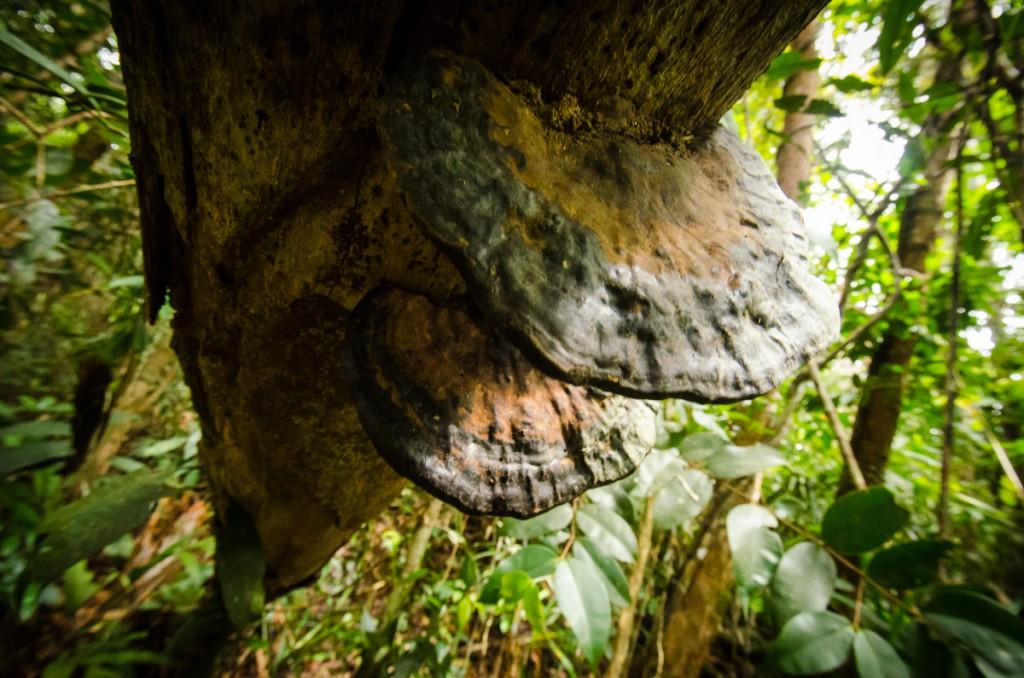 Stong Fungi