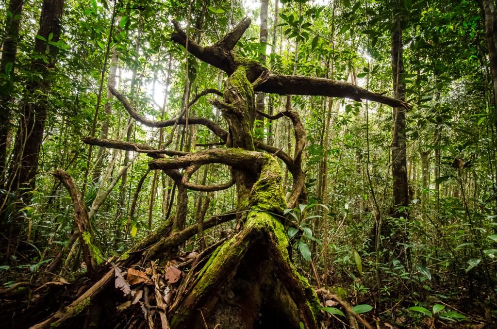 Stong Trees
