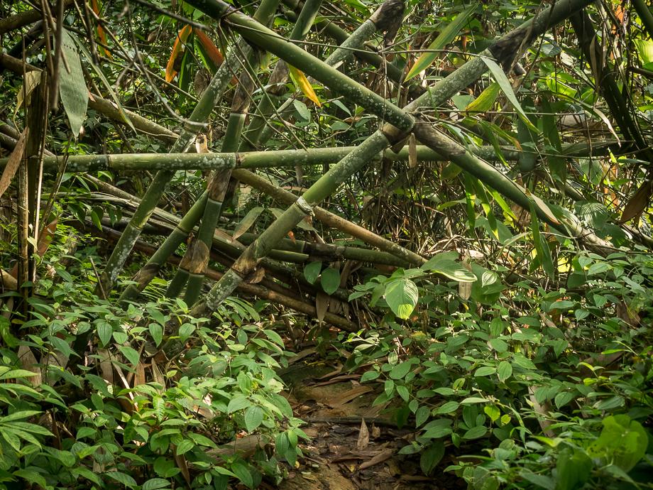 Nuang bamboo