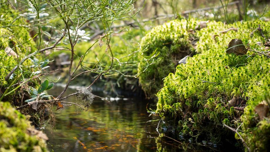 Streams in Nuuksio
