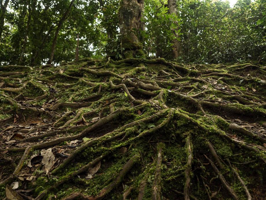Berembun Junction Tree