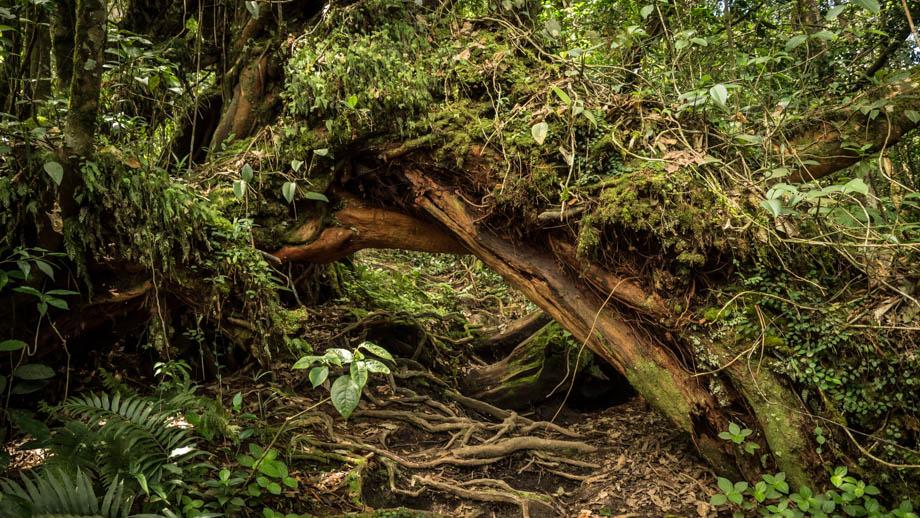 Berembun Jungle