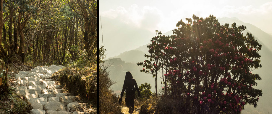 descending from poon hill