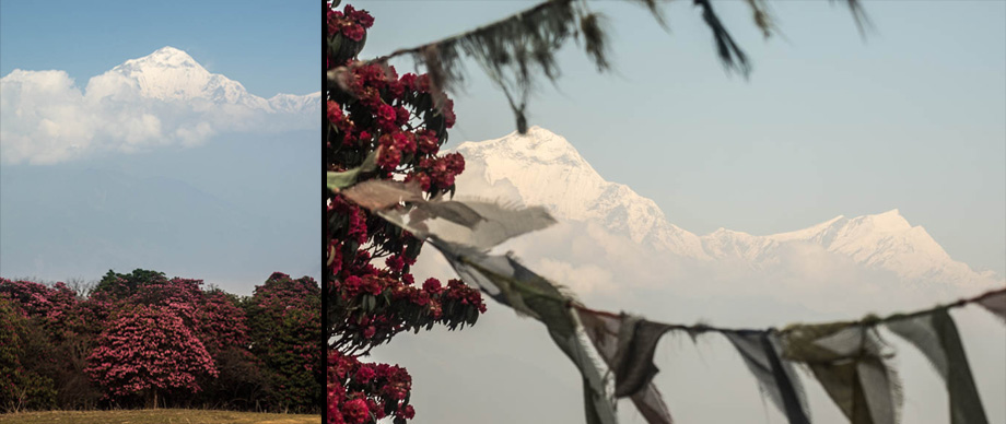 Dhaulagiri after poon hill