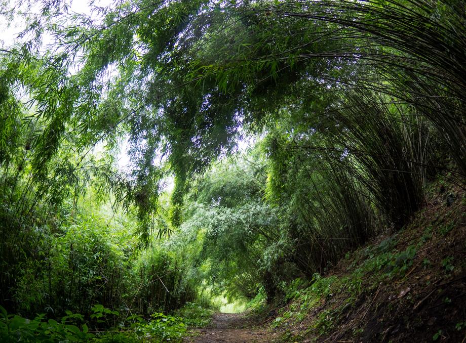 bamboo on the way to Danakyu