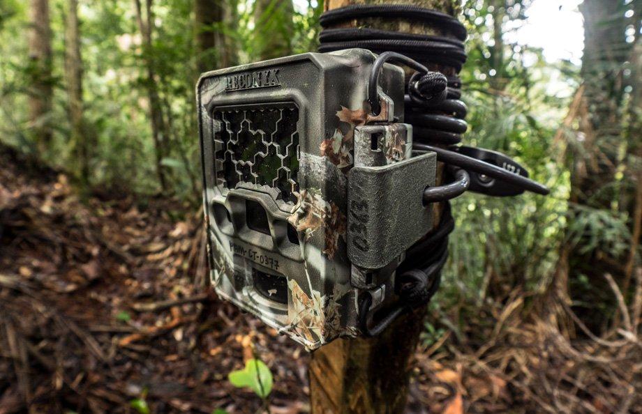 Camera traps