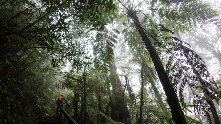 A tree fern